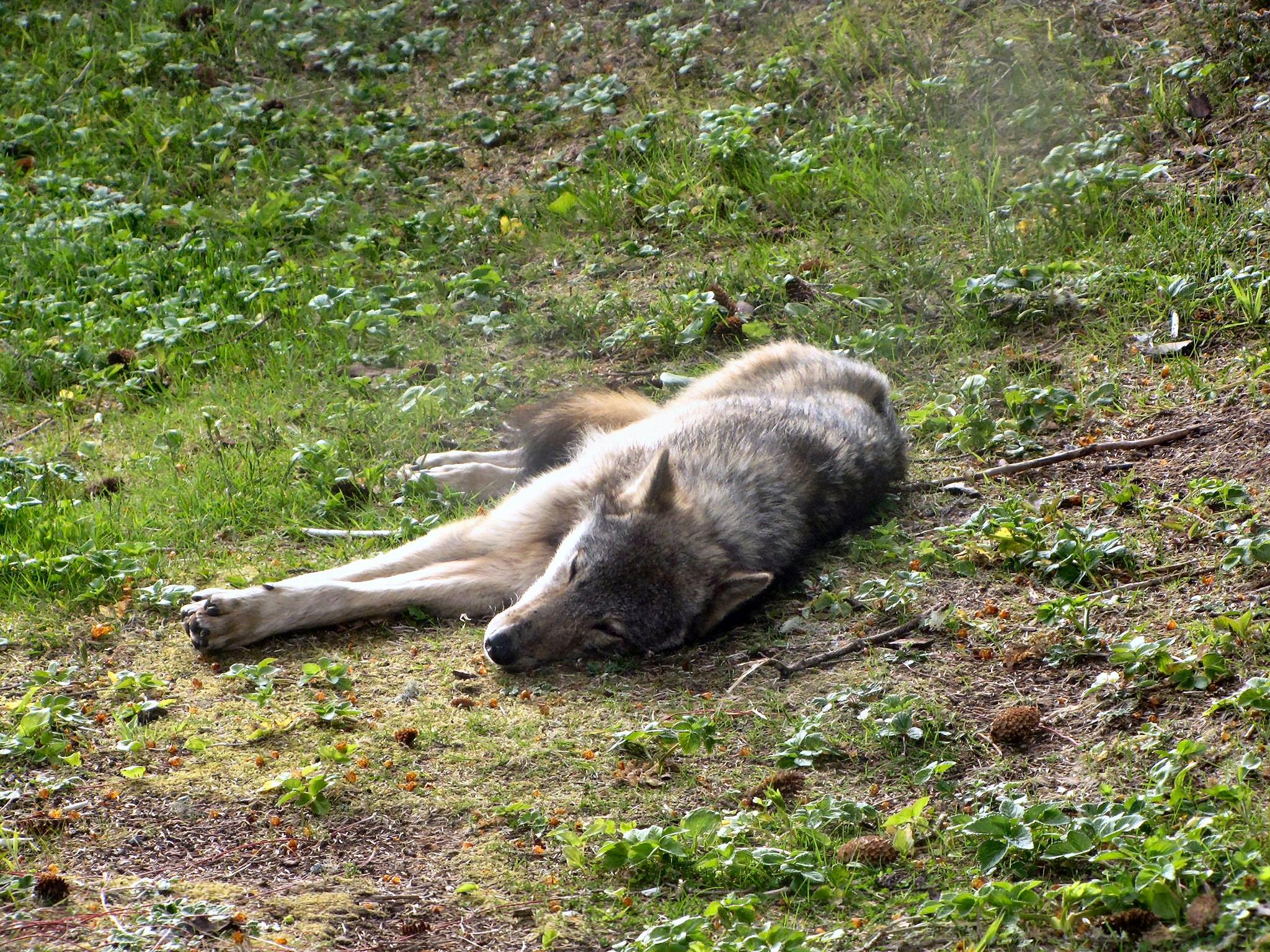 wolf_mci_colin-toner