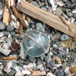 A beachcombing treasure