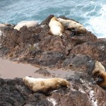 Sea lions at the beach