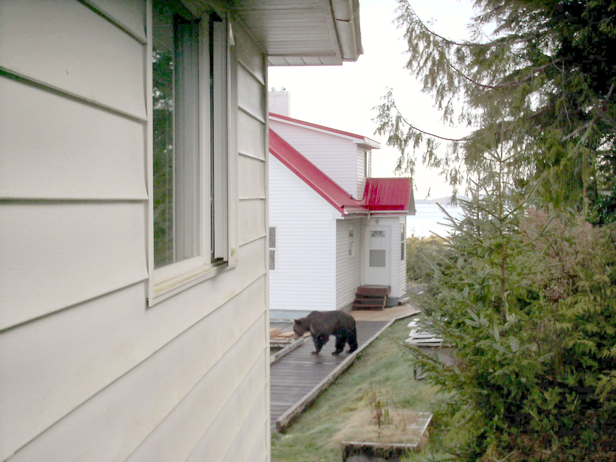 The Bear right between the houses.