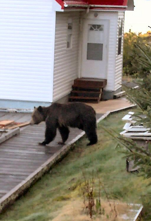 'Bear between houses