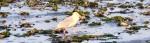 cropped-gull.jpg
