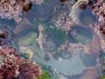 tide-pools-4 (1)