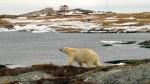 li-greenspond-bear2-852
