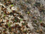 glass-beach-mackerricher-park-fort-bragg-california-3