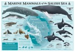 Marine Mammals of the Salish Sea